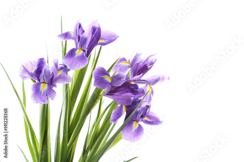 Photo Stands Iris Bouquet of iris flowers isolated on a white