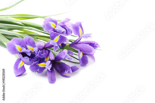 Spoed Foto op Canvas Iris Bouquet of iris flowers isolated on a white