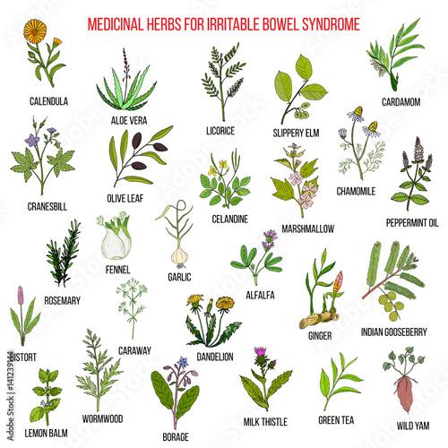 Fototapeta Best herbs for irritable bowel syndrome IBS  obraz na płótnie