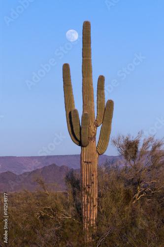 Papiers peints Cactus Saguaro Cactus and Full Moon