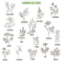 Carminative Herbs. Hand Drawn Set