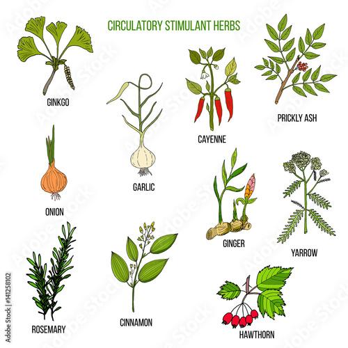 Fotografie, Obraz  Circulatory stimulant herbs