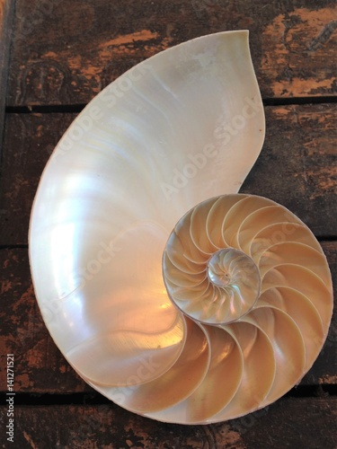 nautilus shell cross section spiral Fibonacci  symmetry growth swirl golden ratio pompilius copy space mollusk pearl stock photo photograph picture image