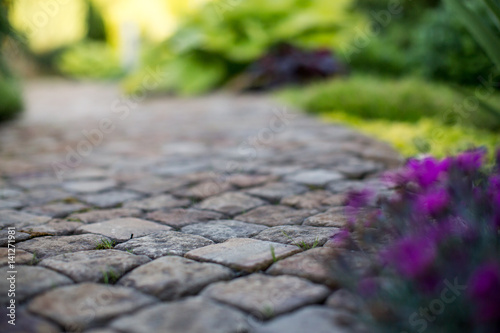 texture paving stones with grass Canvas Print
