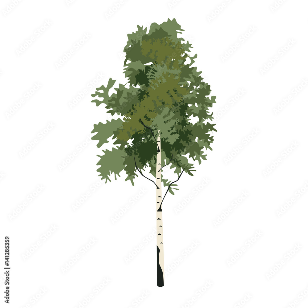 Tree birch clip art, vector