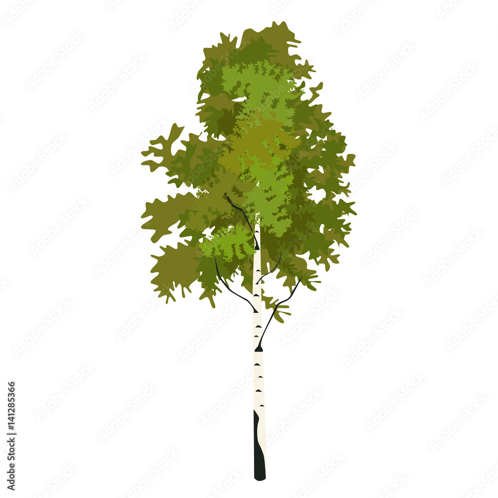 Tree birch in springtime clip art, vector