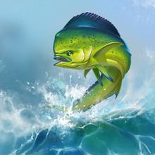 Mahi Mahi Or Dolphin Fish On Background