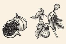 Hand Drawn Sketch Fruit Set.