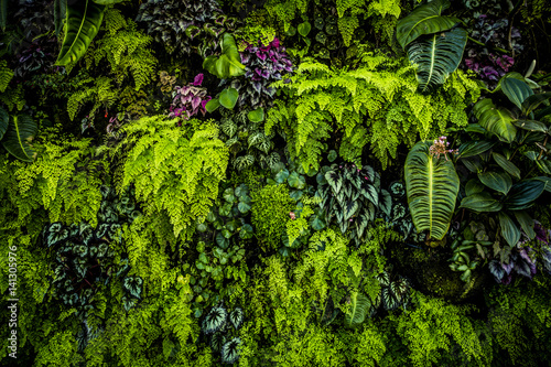 Foto op Canvas Planten Green Plant Wall