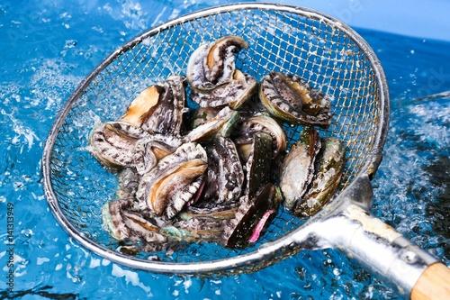 Photo abalone 전복