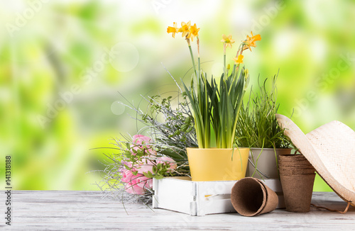 Garden Poster Narcissus Garden tolls and spring seedling isolated on white background. Rubber, narcis and tulips.