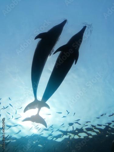 Plakat Delfiny skaczące.