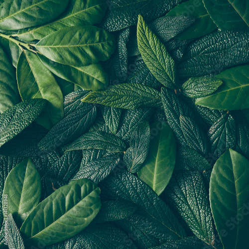 Spoed Foto op Canvas Natuur Creative layout made of green leaves. Flat lay. Nature concept