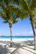 Sand and beach along with coconut trees and beach volley field. The Caribbean ocean.