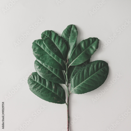 Creative minimal arrangement of leaves on bright white background. Flat lay. Nature concept.