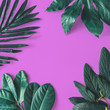 canvas print picture - Creative minimal arrangement of leaves on pink background. Flat lay. Nature concept.