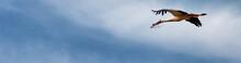 Flying Stork, Banner Cut