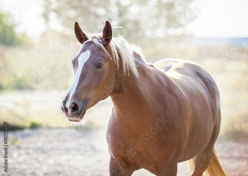 Beauty horses - Buy this stock photo and explore similar