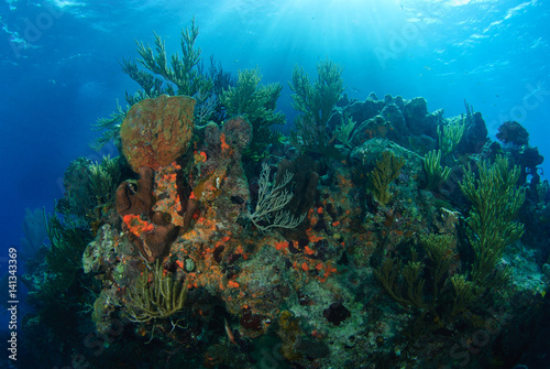Sunlit rocky coral reef with spots of orange sponge