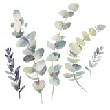 Watercolor eucalyptus branches with round leaves set. Hand painted floral clip art: objects isolated on white background. - 141348136