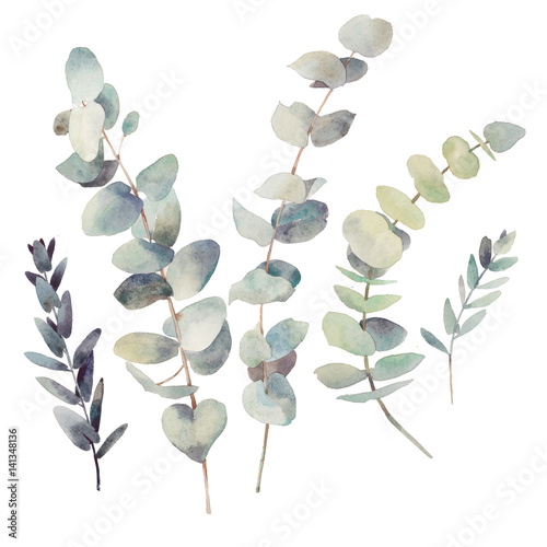 Watercolor Eucalyptus Branches With Round Leaves Set Hand