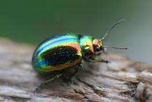 Glowworm - Green Bug Close Up