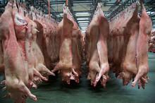 Slaughterhouse, Lagerung Der A...