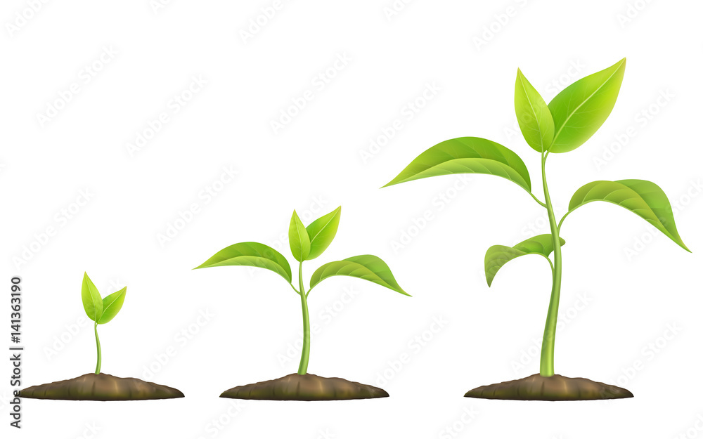 Fototapeta Stages of plant growth. Green sprout grows from the ground. Realistic vector illustration. It symbolizes life and development and ecology.
