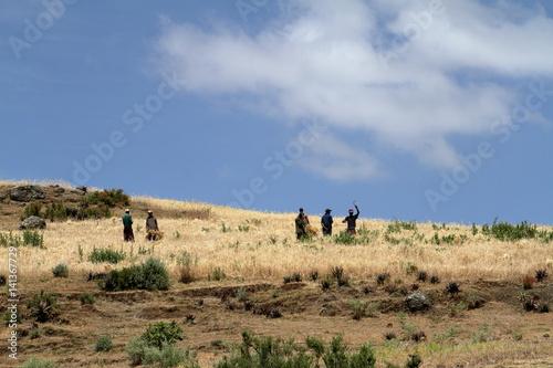 Garden Poster Natural Park Getreideernte in Äthiopien