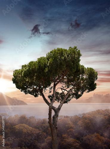 In de dag Beige Tree near lake
