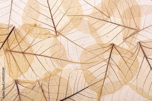 Fototapeta background of brown leaves obraz na płótnie