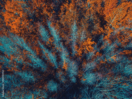 Aerial view of trees on fall Wallpaper Mural