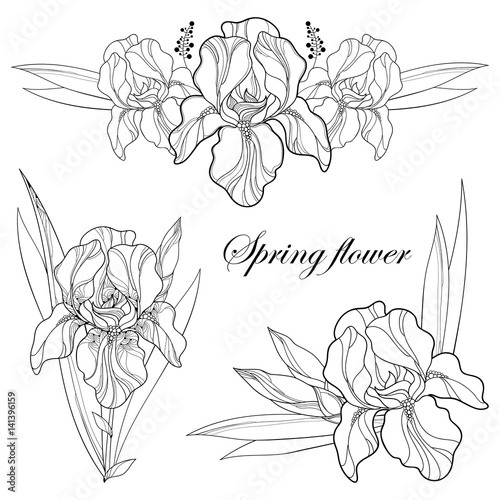 Vector Set With Outline Composition Of Iris Flower Bud And Leaves