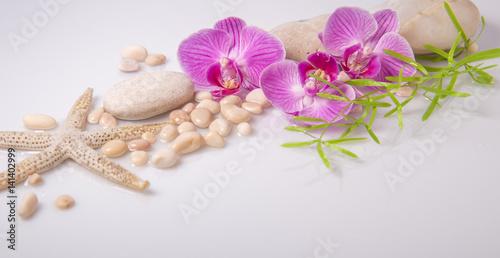 zdroju-tlo-z-kamieniami-i-purpurowa-orchidea-odizolowywajacymi-na-bielu