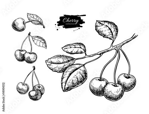 Fotografie, Obraz Cherry vector drawing set