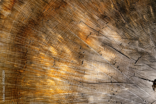 Rich flat wood texture with warm colors and burled finish.  #141422184