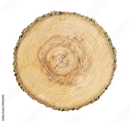 Photo Stands Wood Large circular piece of wood cross section with tree ring texture pattern and cracks isolated on white background. Detailed organic surface from nature.