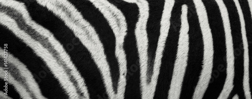 Poster Zebra Zebra Stripes