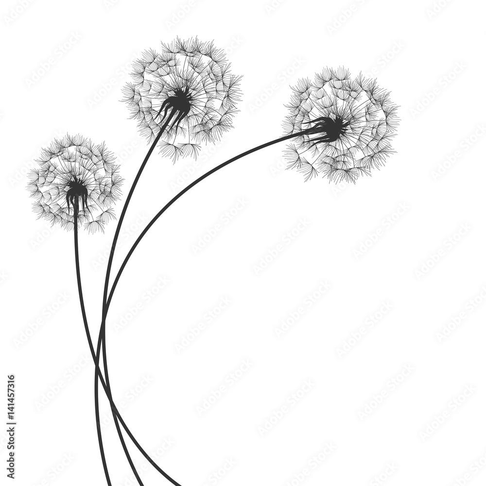 Fototapety, obrazy: Background with Dandelions