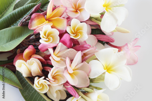 Tuinposter Frangipani Beautiful plumeria flower on white background