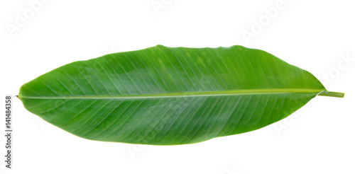 Fotografie, Tablou  Banana Leaf isolated on white background