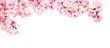 canvas print picture - Rosa Kirschblüten vor weißem Hintergrund