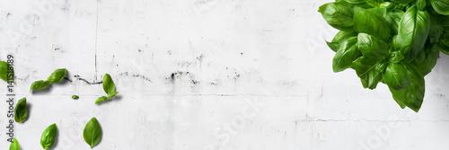Fototapeta Basilikum auf  weißem Steintisch - Banner/ Textfreiraum obraz