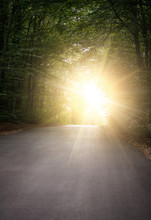 Road In Forrest Leads To Light In The End Of Tunnel