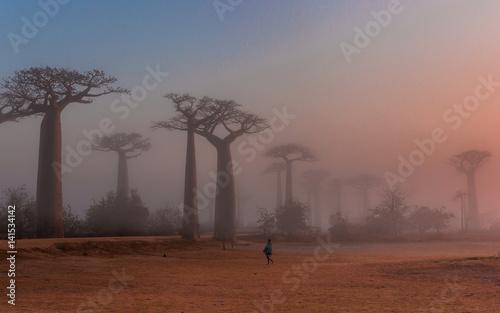 Recess Fitting Baobab Baobab alley Madagascar