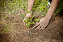 Planting Of Seedlings Of Plants By Children Vegetation Earth Grass Arms Leaves Set Saving The Planet Biodiversity Delicate Hands Caring For The World Thinking About The Future Protecting Eco-system