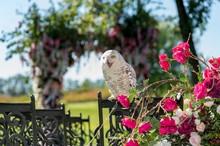 White Birds At The Wedding Ceremony