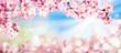 canvas print picture - Rosa Kirschblüten im Frühling