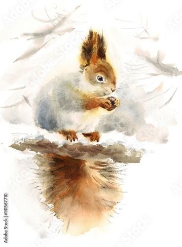 akwarela-wiewiorka-jedzenie-orzechow-reka