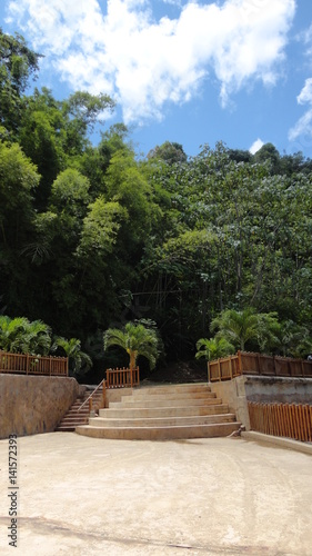 Papiers peints Jardin Stairs to the Forest, Caribbean